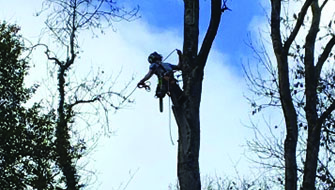 Tree Work & Services